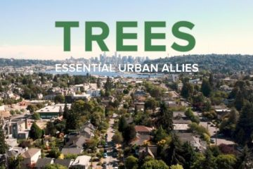 Trees - Essential Urban Allies